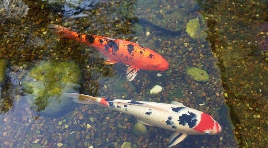 fish-2407210_640